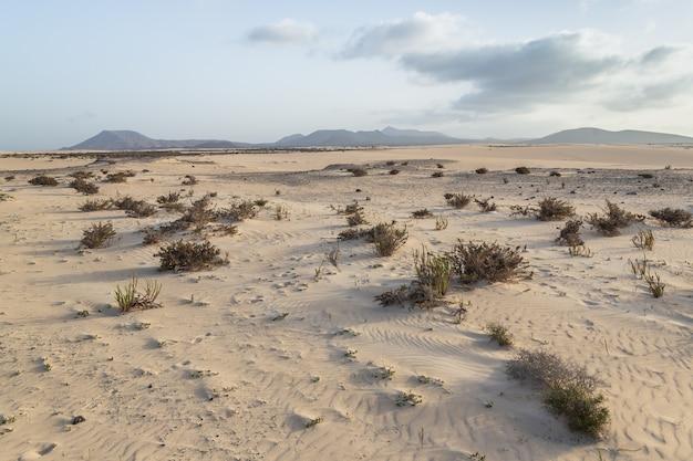 Areia e montanhas vulcânicas no parque natural de corralejo, fuerteventura, ilhas canárias, espanha.