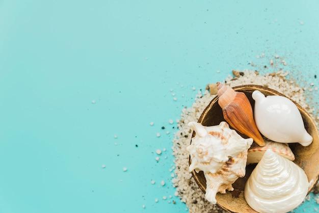 Areia em torno de conchas colocadas em casca de coco