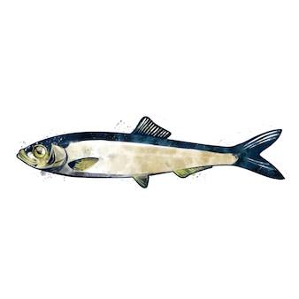 Arenque pequeno, aquarela ilustração isolada de um peixe.