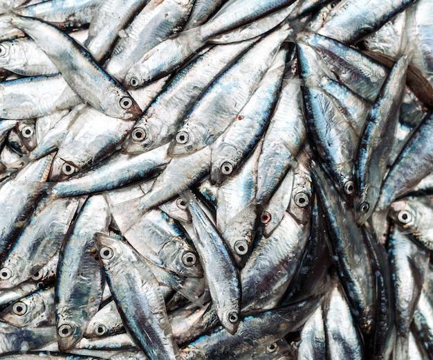 Arenques pequenos de peixe no mercado de peixe.
