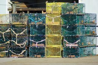 Armadilhas para lagostas, oceano