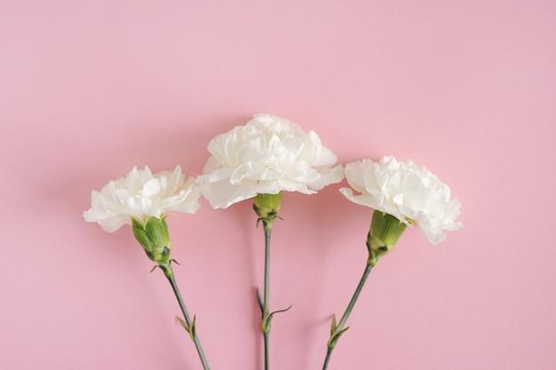 Arnation no banner de fundo rosa para o dia das mães, casamento e dia dos namorados com espaço de cópia para mock up. lindas flores da primavera na vista superior do papel