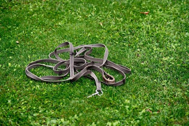 Arnês de cavalo encontra-se em um close-up de gramado verde.