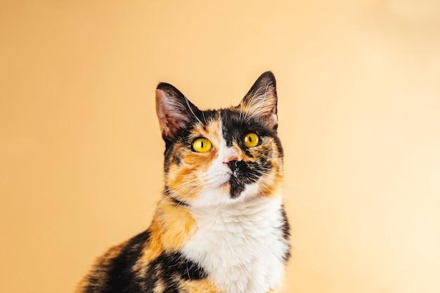 Arquivo de fotografia gato olhando para cima