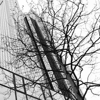 Arranha-céu e árvore - conceito de ambiente urbano. imagem em preto e branco