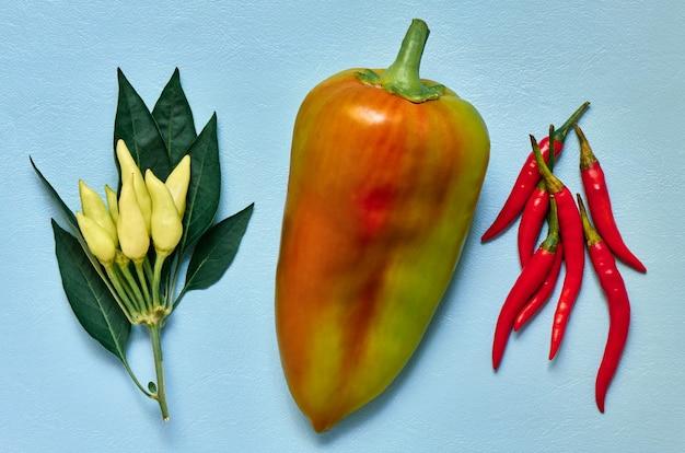 Arranjo colorido de close up de variedade de pimentas, vista de cima, ingrediente Foto Premium