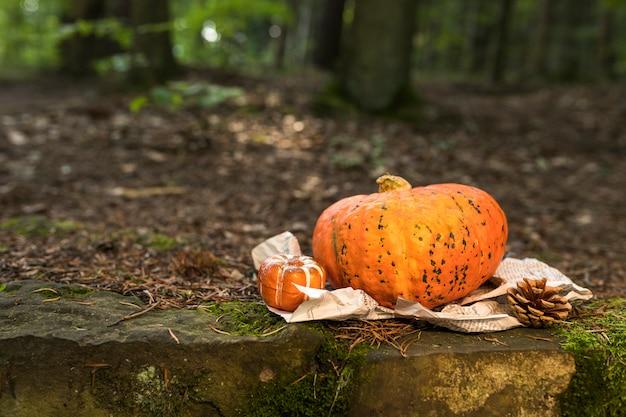 Arranjo com abóbora e pinha na floresta