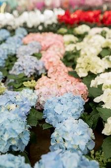 Arranjo com flores coloridas em um mercado