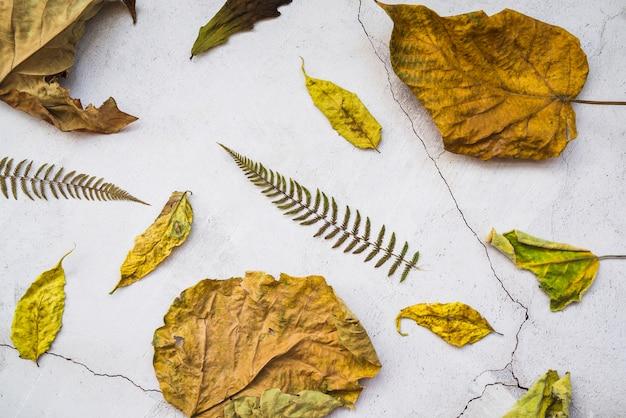 Arranjo com folhas amarelas e marrons secas