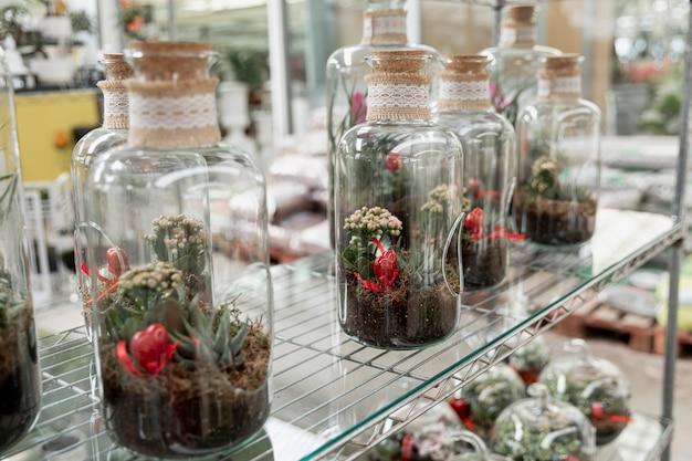 Arranjo com plantas crescendo dentro de frascos