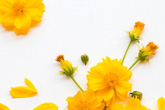 Arranjo cosmos de flores amarelas planas em estilo de cartão postal