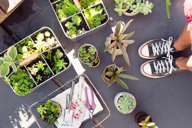 Arranjo da vista superior de plantas diferentes