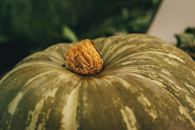 Arranjo de decoração rústica de outono com abóboras close-up