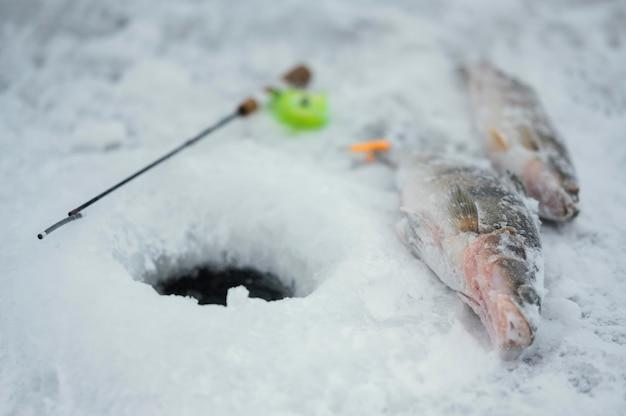 Arranjo de elementos de pesca ao ar livre