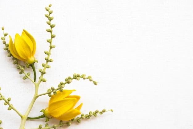 Arranjo de flores amarelas plano plano