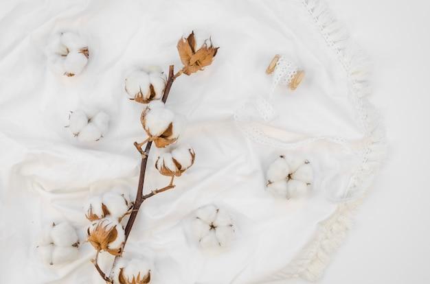 Arranjo de flores de algodão de vista superior