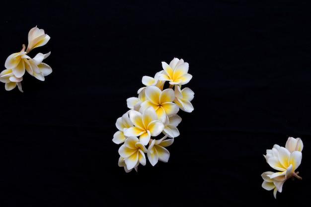 Arranjo de flores de frangipani em estilo de cartão postal em preto
