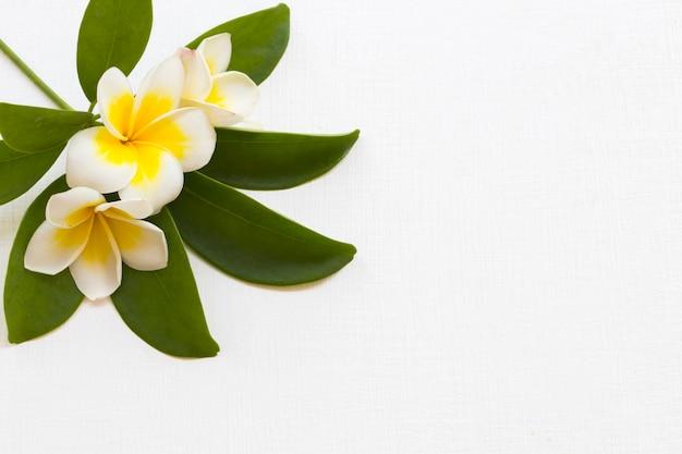 Arranjo de flores de frangipani plano plano estilo cartão-postal