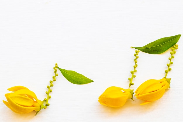 Arranjo de flores de ylang ylang música pontuação estilo cartão postal