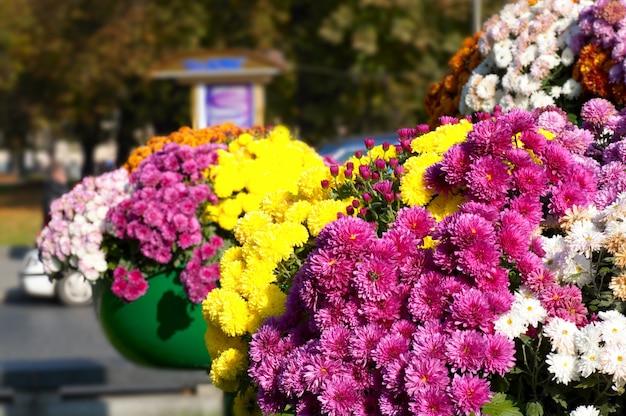Arranjo de flores em uma rua no centro histórico de lvov-city (ucrânia)