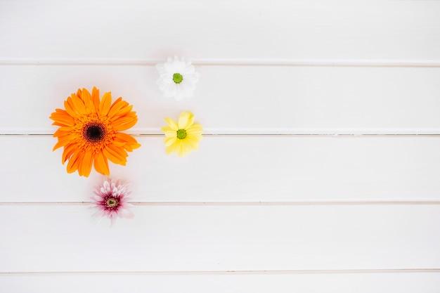 Arranjo de flores macias em branco