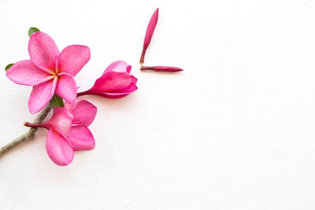 Arranjo de flores rosa frangipani em estilo de cartão postal
