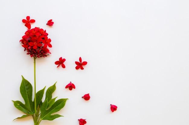 Arranjo de flores vermelhas rubiaceae estilo cartão postal
