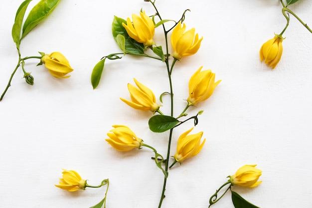 Arranjo de flores ylang em branco