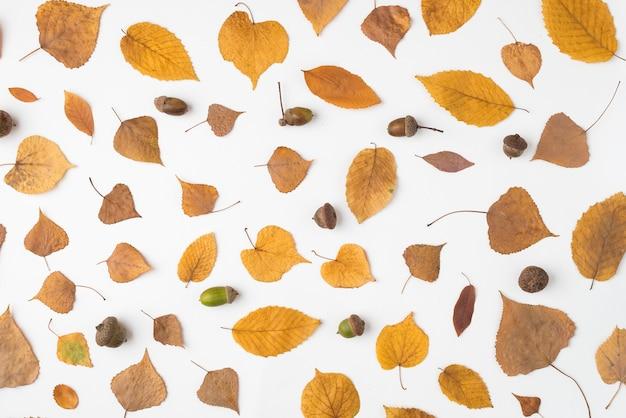 Arranjo de folhas caídas e bolotas