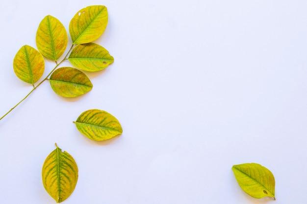 Arranjo de folhas de outono em estilo de cartão postal plano