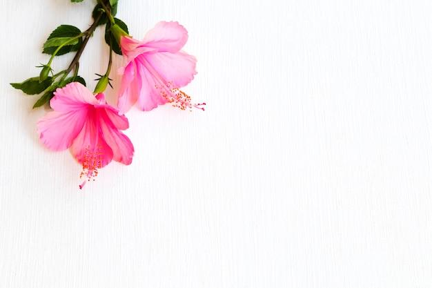 Arranjo de hibisco com flores rosa estilo cartão postal
