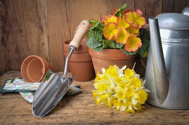 Arranjo de jardinagem com ferramentas e buquê de narcisos em fundo de madeira