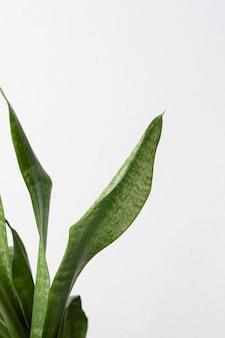 Arranjo de natureza morta de planta de casa verde