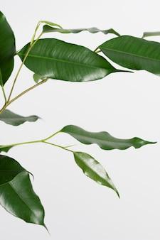 Arranjo de natureza morta de planta verde