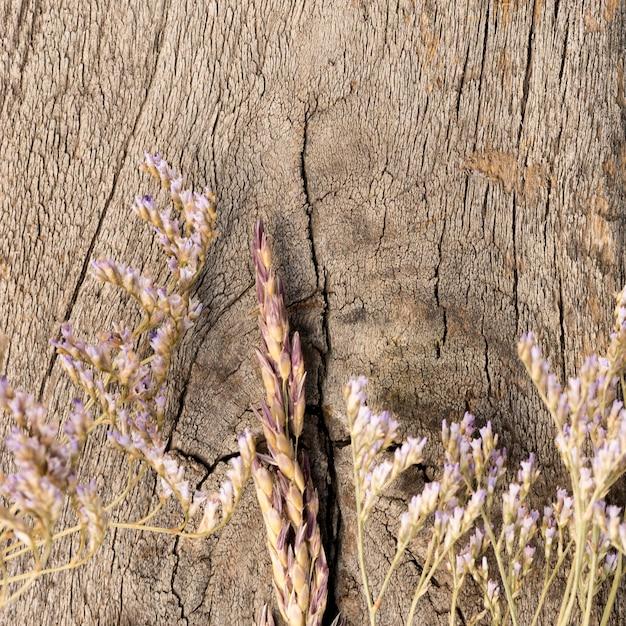 Arranjo de plantas secas em fundo de madeira