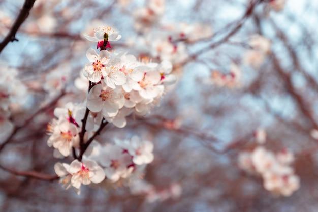 Arranjo de primavera de galhos com flores da árvore
