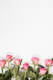 Arranjo de rosas rosa em fundo de espaço branco cópia