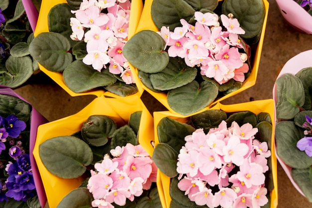 Arranjo de vista superior com flores cor de rosa e roxas