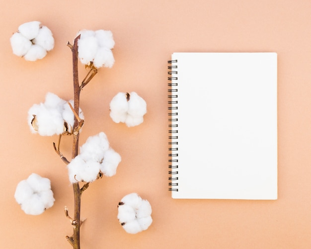 Arranjo de vista superior com flores de algodão e caderno