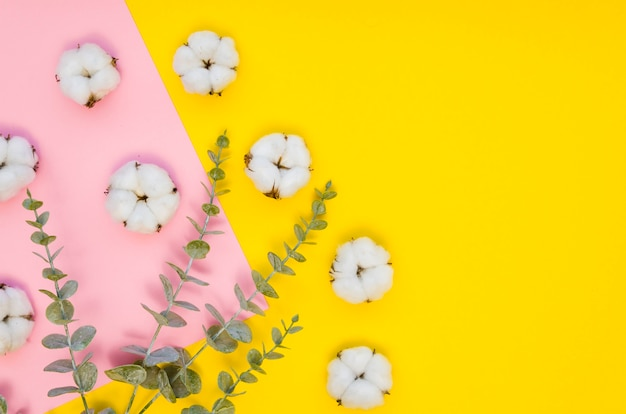 Arranjo de vista superior com flores de algodão