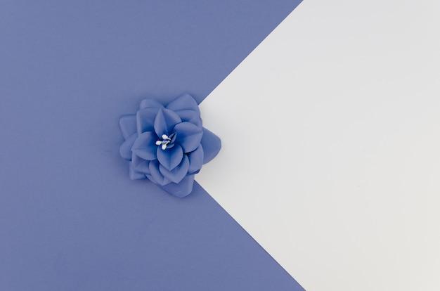 Arranjo de vista superior com pequena flor azul