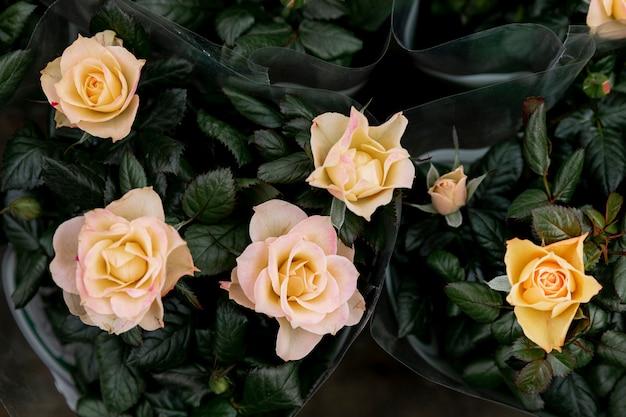Arranjo de vista superior com rosas amarelas