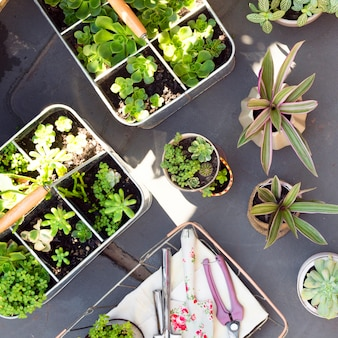 Arranjo de vista superior de diferentes plantas em vasos