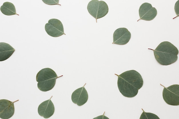 Arranjo de vista superior de folhas verdes