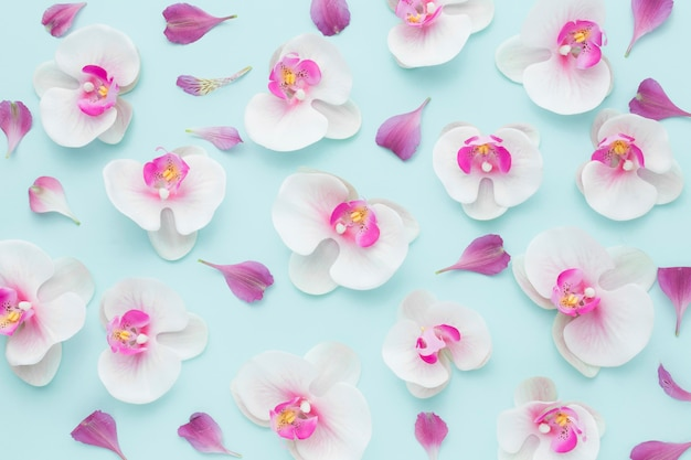Arranjo de vista superior de orquídeas cor de rosa
