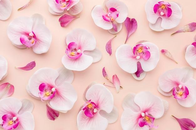Arranjo de vista superior de orquídeas