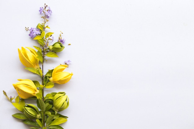 Arranjo de ylang ylang com flores amarelas em estilo de cartão postal
