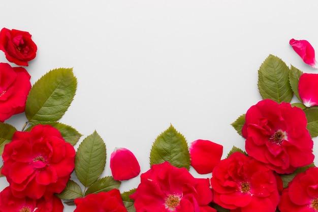 Arranjo liso leigo de rosas de iceberg