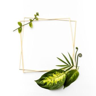 Arranjo plano de folhas verdes com molduras vazias