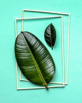 Arranjo plano de folhas verdes com molduras